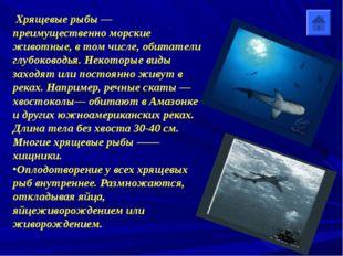 Хрящевые рыбы — преимущественно морские животные, в том числе, обитатели глу
