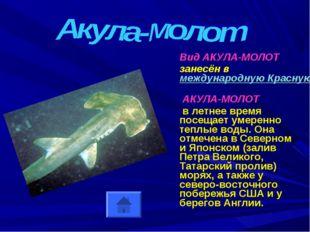 Вид АКУЛА-МОЛОТ занесён в международную Красную Книгу АКУЛА-МОЛОТ в летнее в