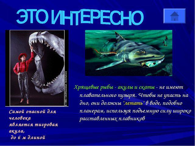 Хрящевые рыбы - акулы и скаты - не имеют плавательного пузыря. Чтобы не упас...