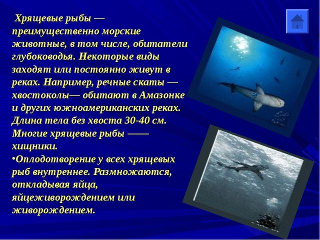 Хрящевые рыбы — преимущественно морские животные, в том числе, обитатели глу...