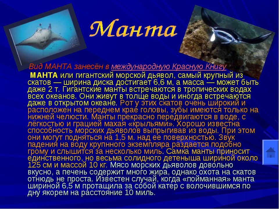 Вид МАНТА занесён в международную Красную Книгу МАНТА или гигантский морской...