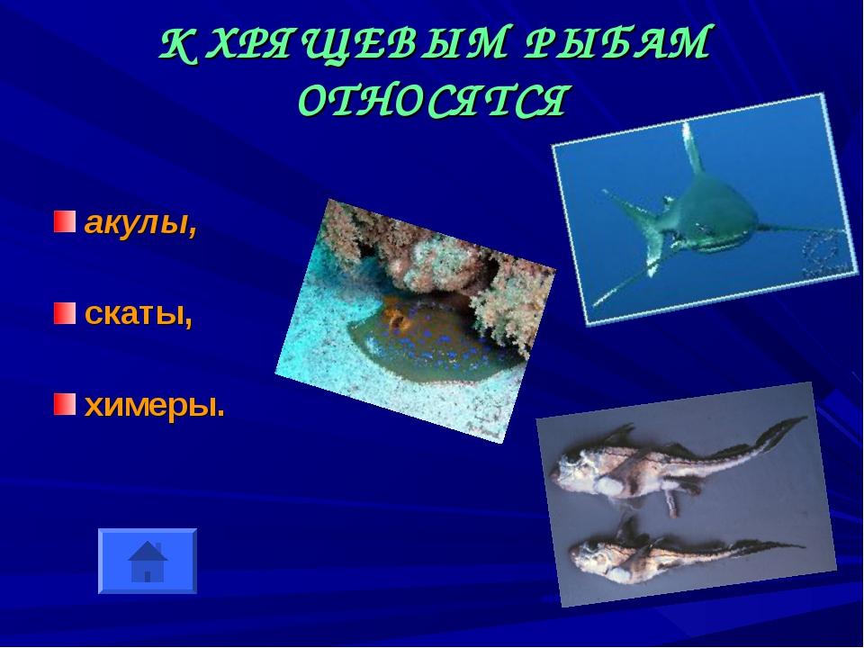 К ХРЯЩЕВЫМ РЫБАМ ОТНОСЯТСЯ акулы, скаты, химеры.