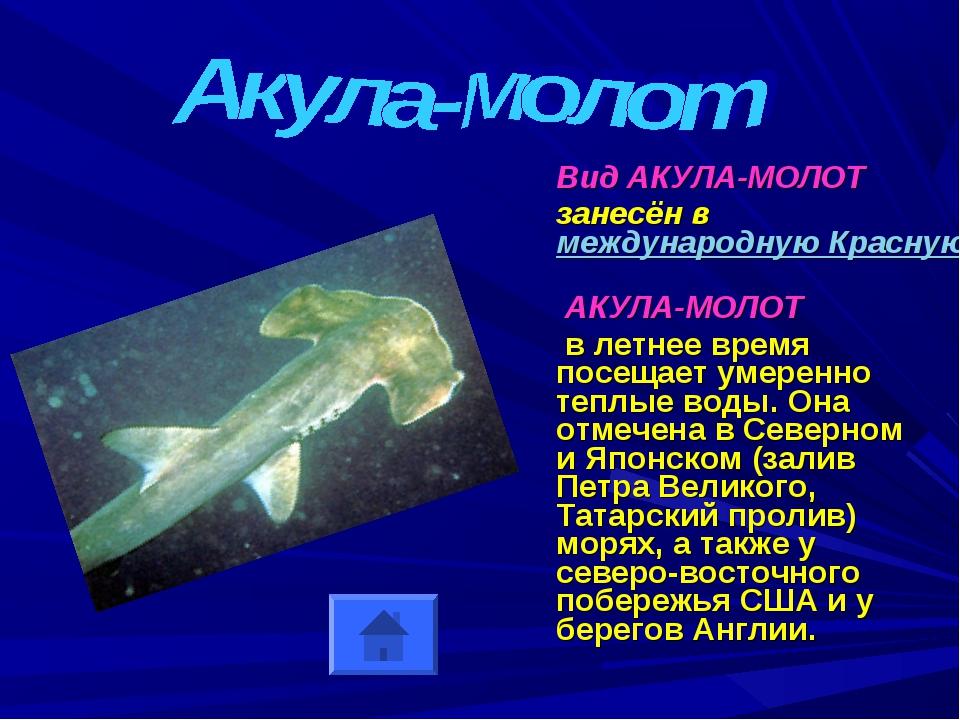 Вид АКУЛА-МОЛОТ занесён в международную Красную Книгу АКУЛА-МОЛОТ в летнее в...