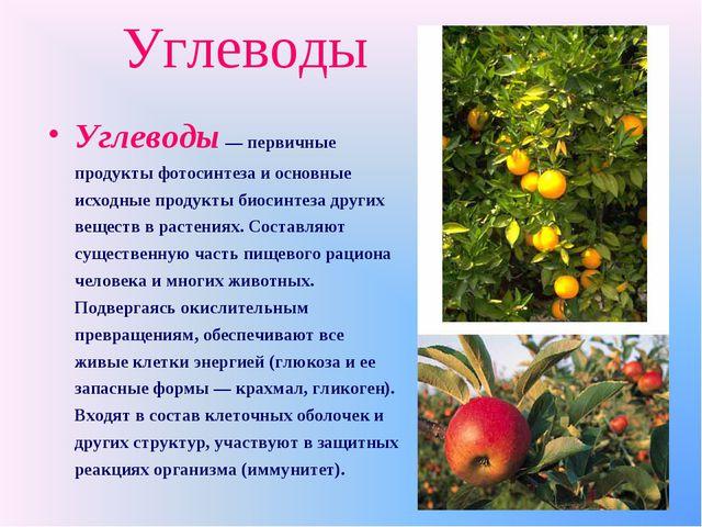 Углеводы Углеводы — первичные продукты фотосинтеза и основные исходные продук...