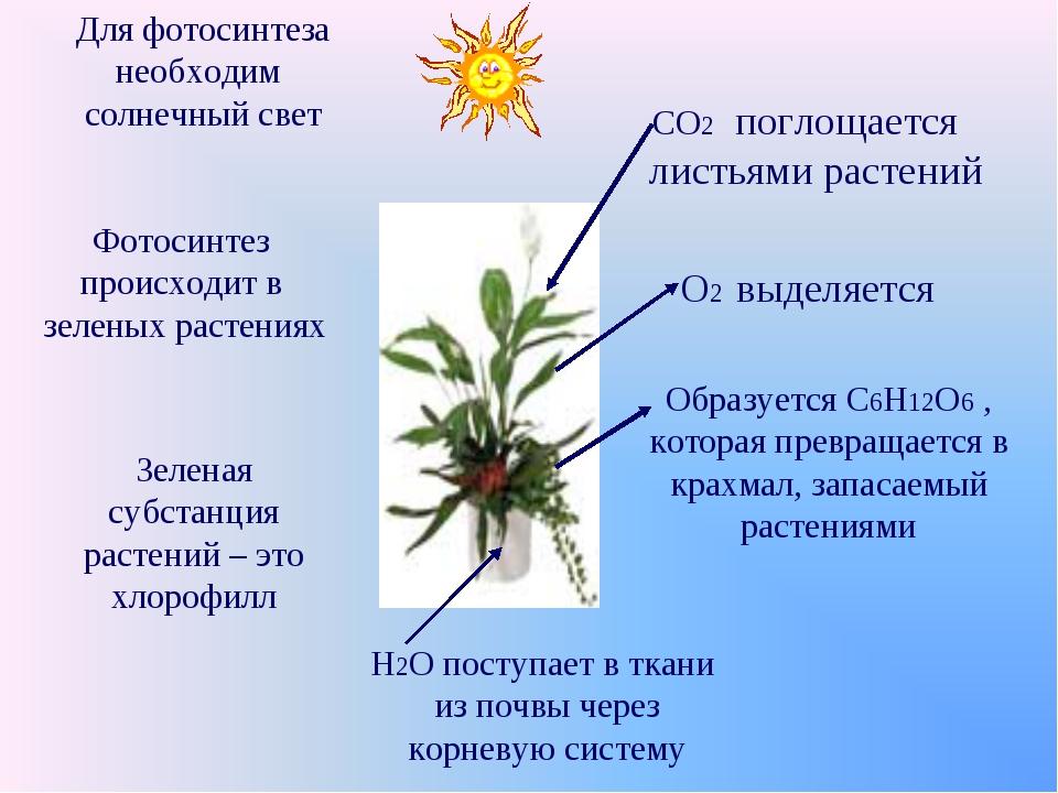 Для фотосинтеза необходим солнечный свет Фотосинтез происходит в зеленых раст...