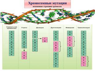 Хромосомные мутации изменение строения хромосом
