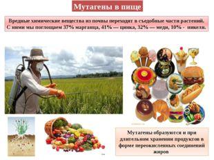 Мутагены в пище Вредные химические вещества из почвы переходят в съедобные ча