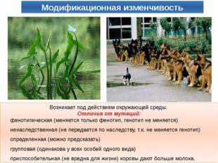 Возникает под действием окружающей среды. Отличия от мутаций: фенотипическая