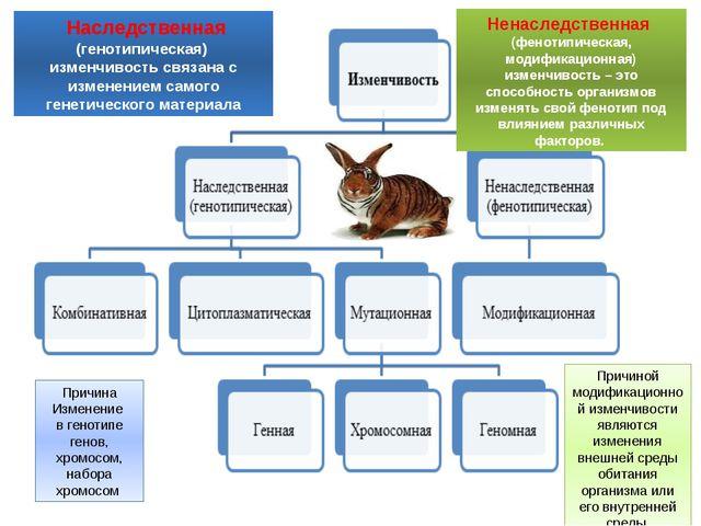 Наследственная (генотипическая) изменчивость связана с изменением самого ген...