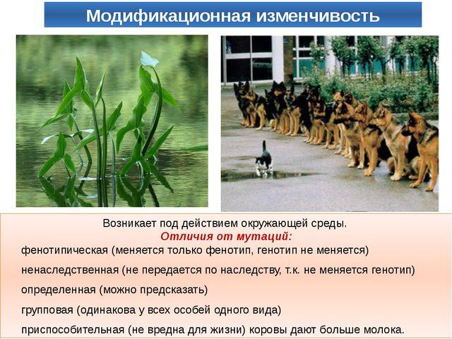 Возникает под действием окружающей среды. Отличия от мутаций: фенотипическая...