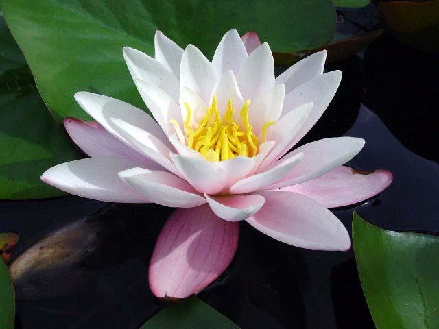 http://flower.onego.ru/voda/enc_2380.jpg