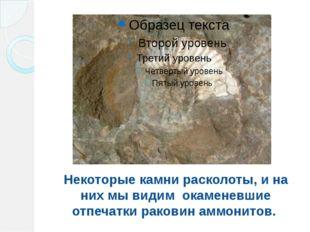 Некоторые камни расколоты, и на них мы видим окаменевшие отпечатки раковин ам