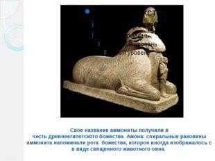 Свое название аммониты получили в честьдревнеегипетскогобожества Амона: сп