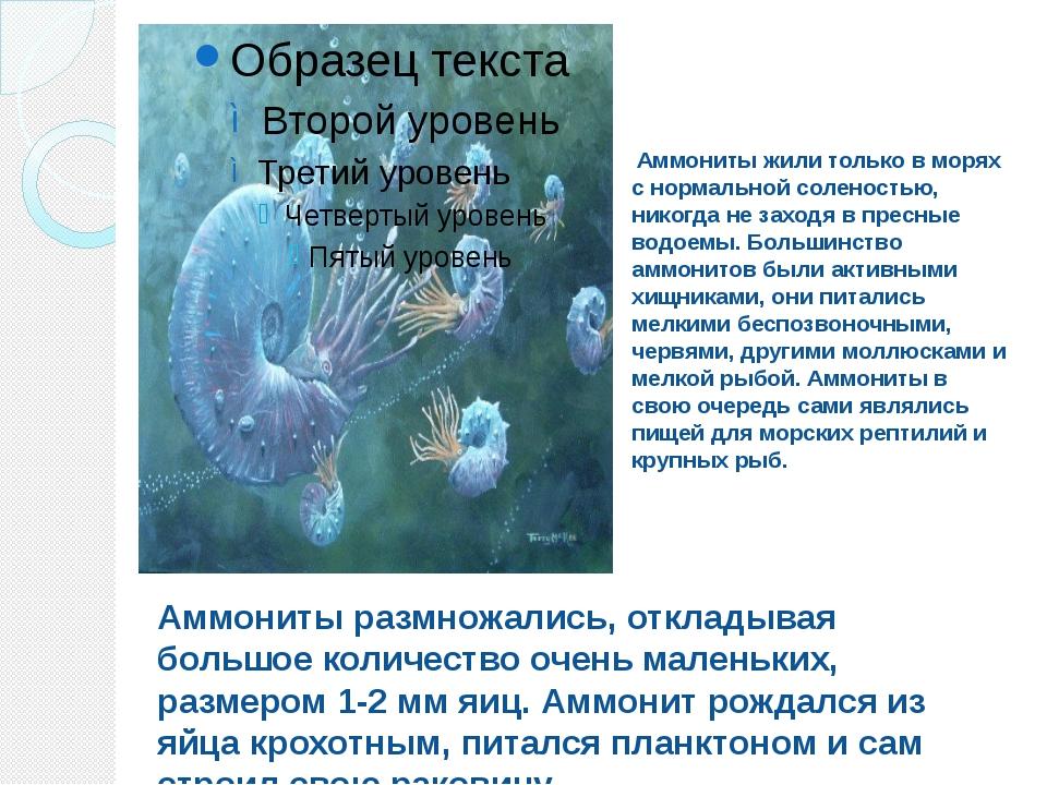 Аммониты жили только в морях с нормальной соленостью, никогда не заходя в пр...