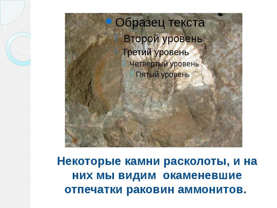 Некоторые камни расколоты, и на них мы видим окаменевшие отпечатки раковин ам...