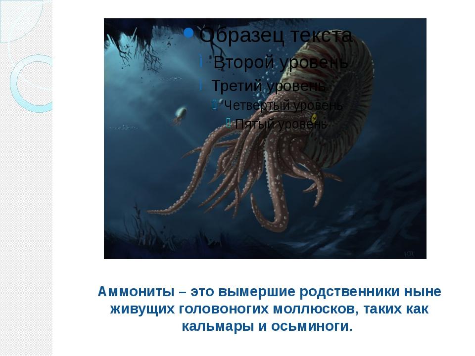 Аммониты – это вымершие родственники ныне живущих головоногих моллюсков, таки...