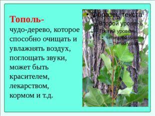 Тополь- чудо-дерево, которое способно очищать и увлажнять воздух, поглощать з