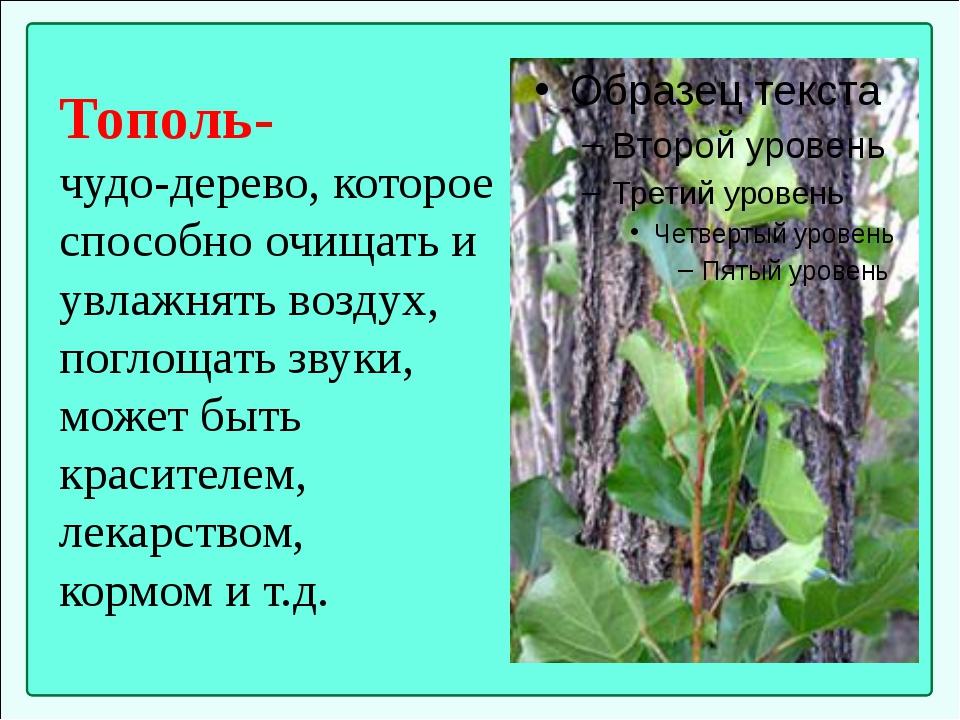 Тополь- чудо-дерево, которое способно очищать и увлажнять воздух, поглощать з...
