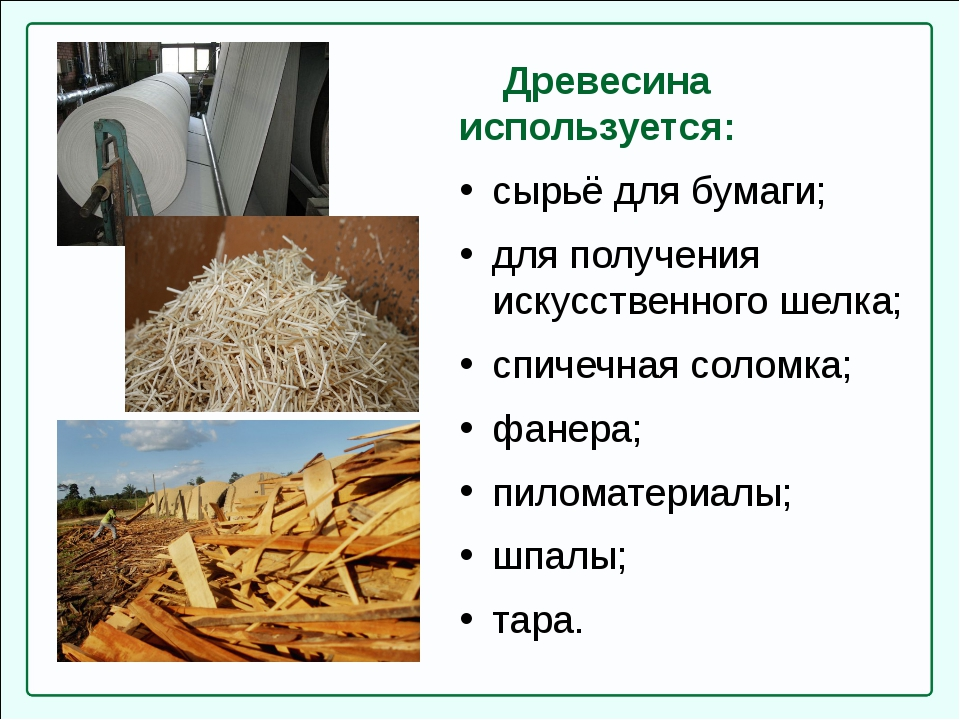 Древесина используется: сырьё для бумаги; для получения искусственного шелка...