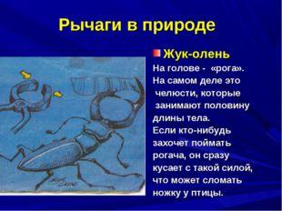 Рычаги в природе Жук-олень На голове - «рога». На самом деле это челюсти, кот