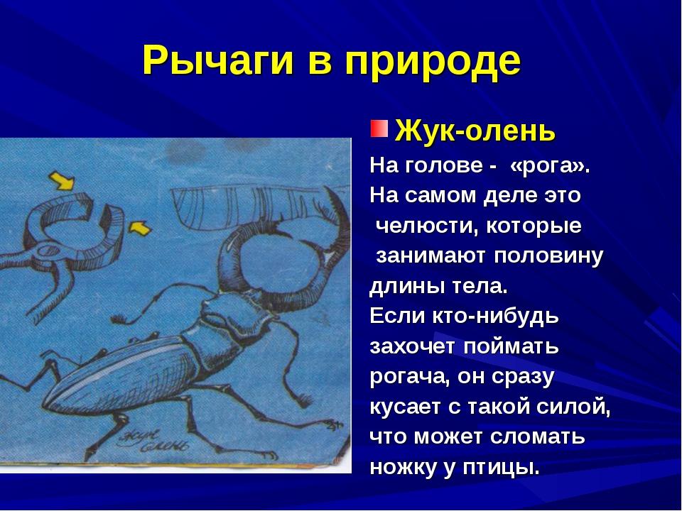 Рычаги в природе Жук-олень На голове - «рога». На самом деле это челюсти, кот...