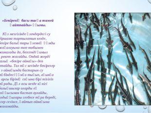 «Бекіренің басы тасқа тимей қайтпайды» ұғымы. Күз мезгілінде өзендердегі су б