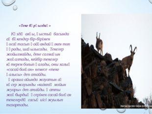 «Теке бұрқылдақ» Күздің аяғы, қыстың басында ақ бөкендер бір-бірімен қосақта