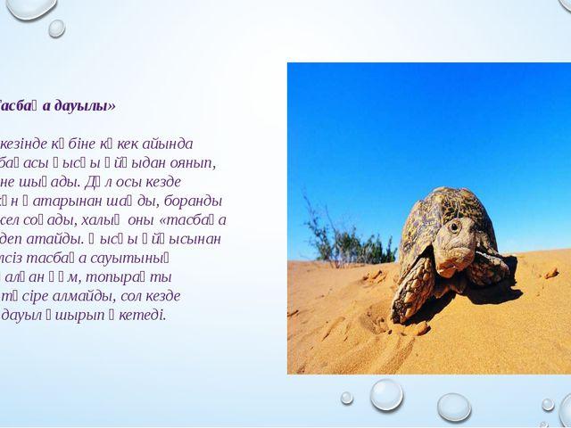 «Тасбақа дауылы» Көктем кезінде көбіне көкек айында дала тасбақасы қысқы ұйқ...