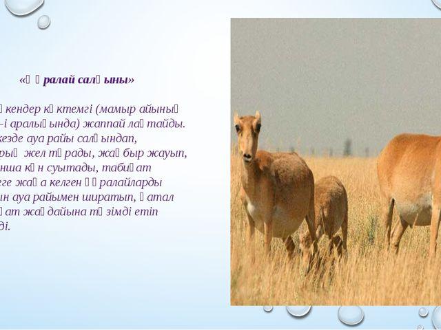 «Құралай салқыны» Ақ бөкендер көктемгі (мамыр айының 17-25-і аралығында) жап...
