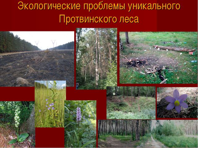 Экологические проблемы уникального Протвинского леса