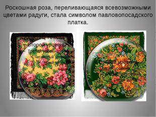 Роскошная роза, переливающаяся всевозможными цветами радуги, стала символом п