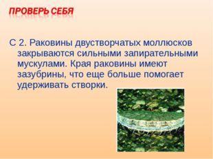 С 2. Раковины двустворчатых моллюсков закрываются сильными запирательными мус