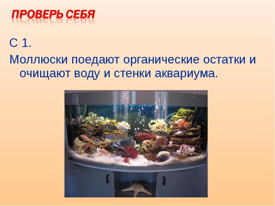 С 1. Моллюски поедают органические остатки и очищают воду и стенки аквариума.