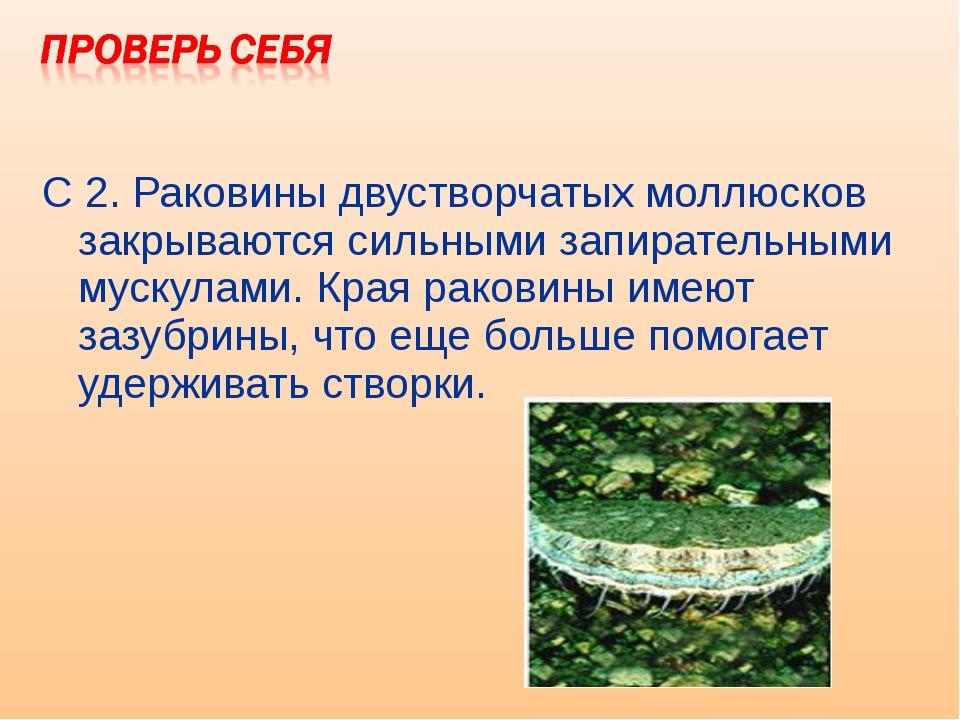 С 2. Раковины двустворчатых моллюсков закрываются сильными запирательными мус...