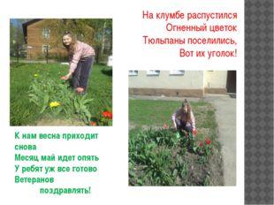 На клумбе распустился Огненный цветок Тюльпаны поселились, Вот их уголок! К н