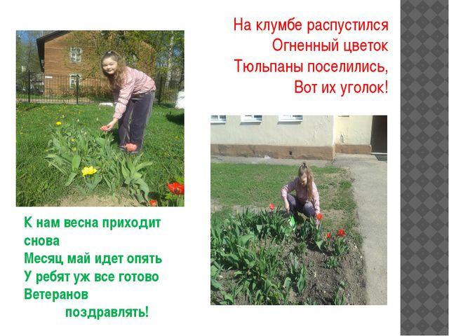 На клумбе распустился Огненный цветок Тюльпаны поселились, Вот их уголок! К н...