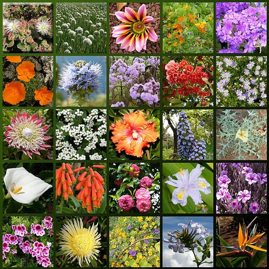 Каталог цветов на букву к
