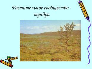 Растительное сообщество - тундра