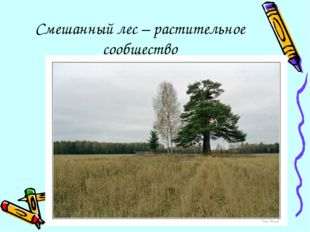 Смешанный лес – растительное сообщество