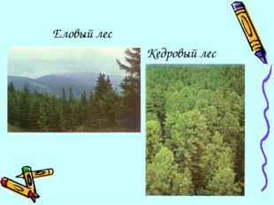Еловый лес Кедровый лес