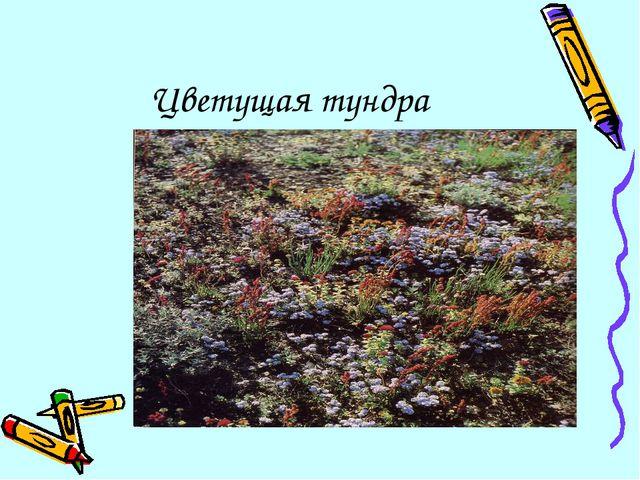 Цветущая тундра