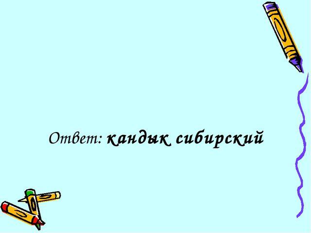 Ответ: кандык сибирский