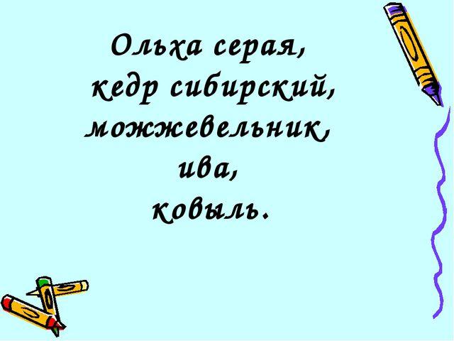 Ольха серая, кедр сибирский, можжевельник, ива, ковыль.