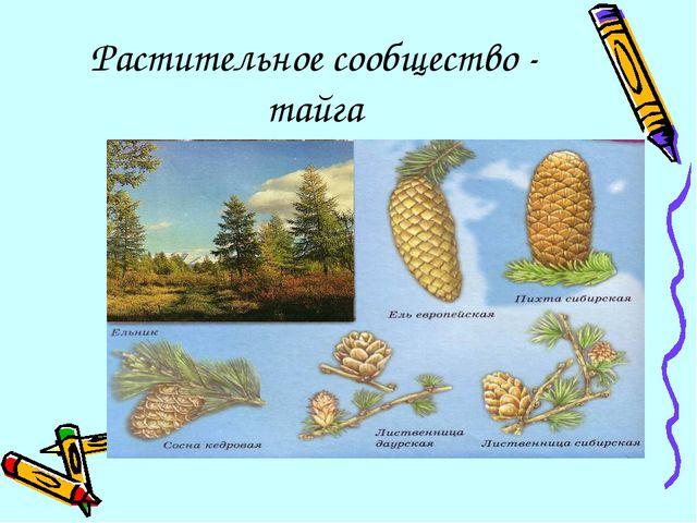 Растительное сообщество - тайга