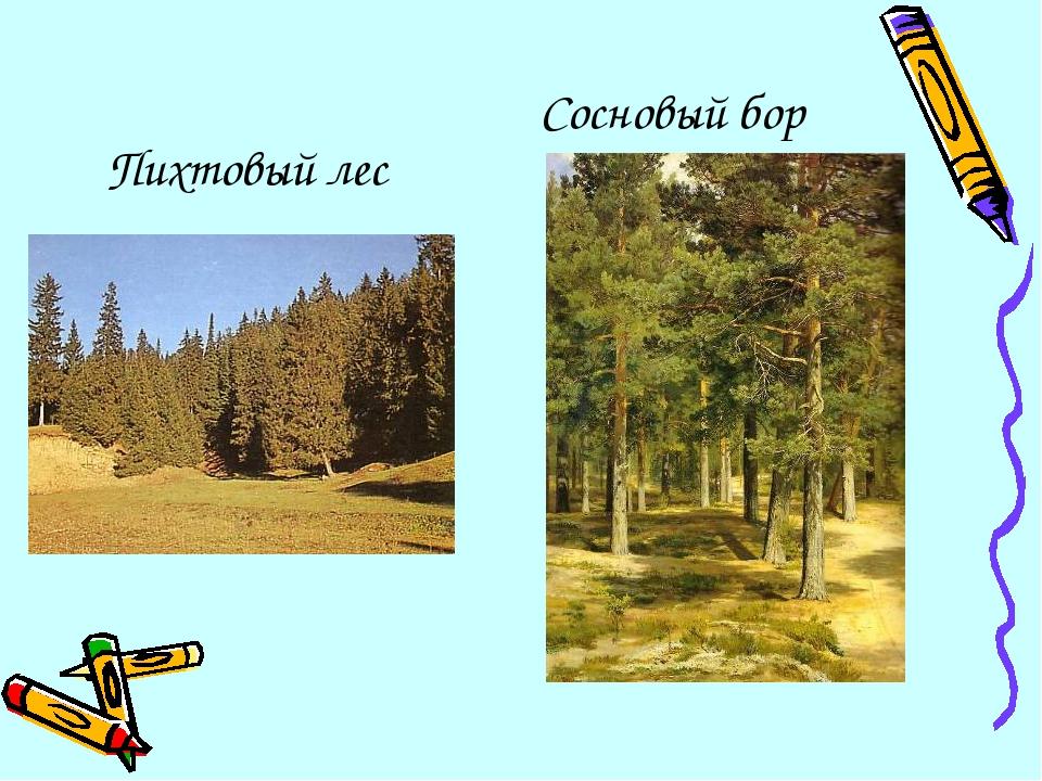 Пихтовый лес Сосновый бор