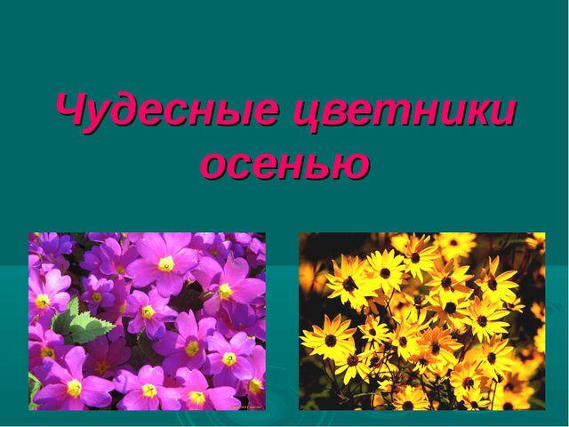 Чудесные цветники осенью