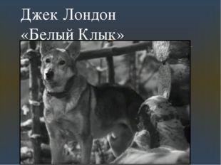 Джек Лондон «Белый Клык» 