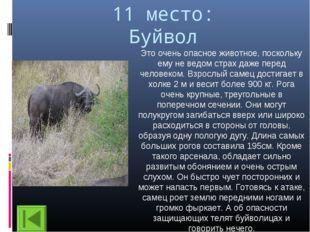 11 место: Буйвол Это очень опасное животное, поскольку ему не ведом страх даж