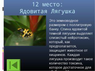 12 место: Ядовитая Лягушка Это земноводное размером с поллитровую банку. Спин