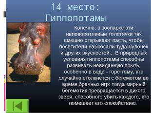 14 место: Гиппопотамы Конечно, в зоопарке эти неповоротливые толстячки так см